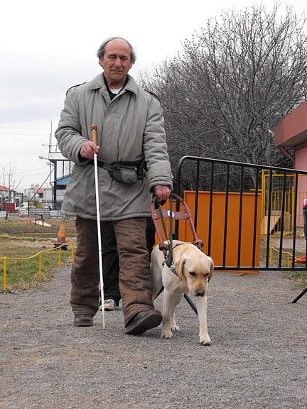 Елза е най-щастливото куче, защото с Димитър живеят и работят в чужбина