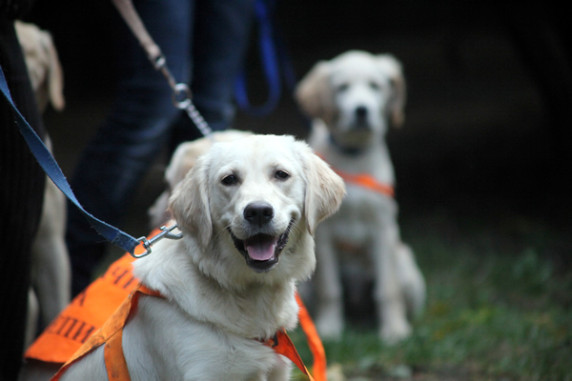 Българско училище за кучета водачи на слепи