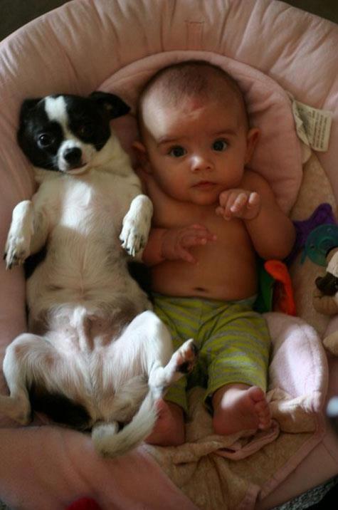 бебе и куче