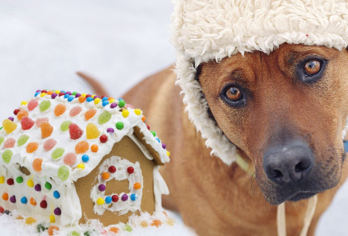 getty_rf_photo_of_sad_dog_and_gingerbread_house