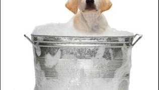 къпещо се куче