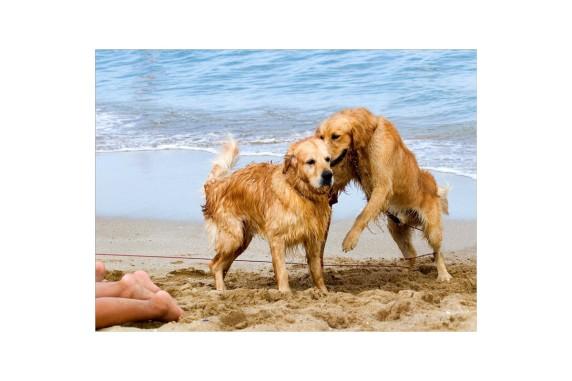 куче на плажа