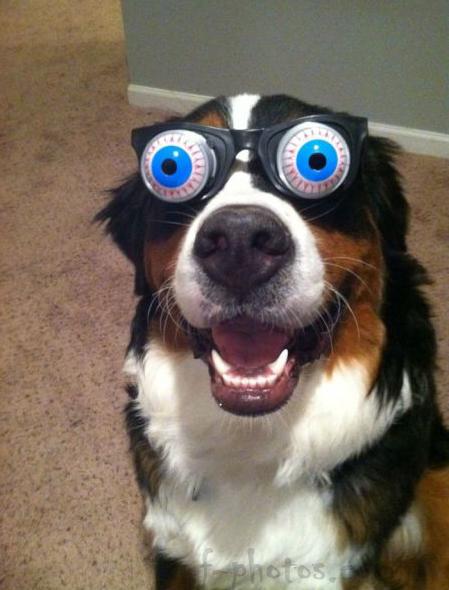 куче очи