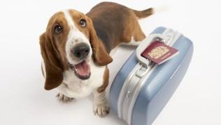 куче с багаж