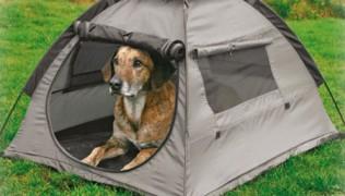 куче в палатка