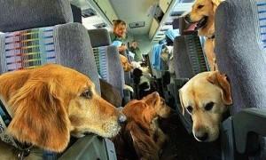 кучета в самолет 1