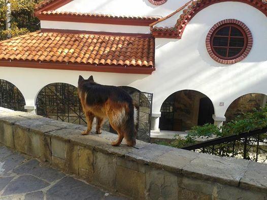 манастирско куче