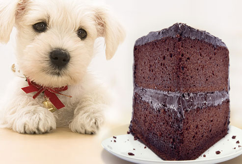 photolibrary_rm_photo_of_sad_dog_and_chocolate