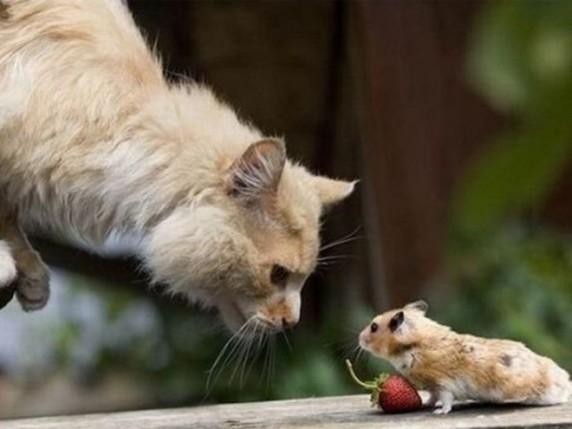 котка, мишка,ягода