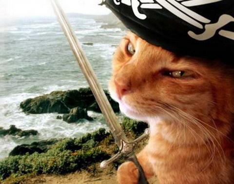 котка пират