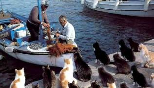 котки на пристанище