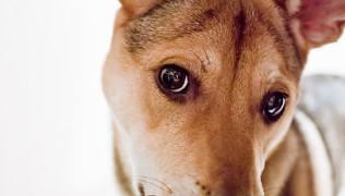 безпородно куче