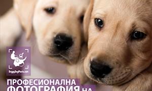 300x250-doggydogphoto (1)
