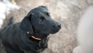 TimeHeroes.blog-бебета супер герой, или как се отглежда куче водач 27.04.2016