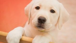 Нова телевизия-в търсене на приемни стопани за 6 кученца-26.06.2016г.