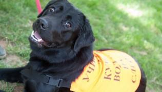 """Предаването """"Преди обед"""" за обучението на кучета за диагностика на диабет 14.11.2016г."""