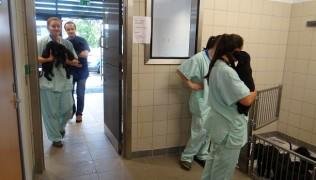 Чипиране, ваксиниране и обезпаразитяване на кучило - 6-7 седмица