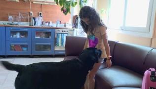 БТВ Новините – Обучено куче помага на дете с диабет 16.06.2017