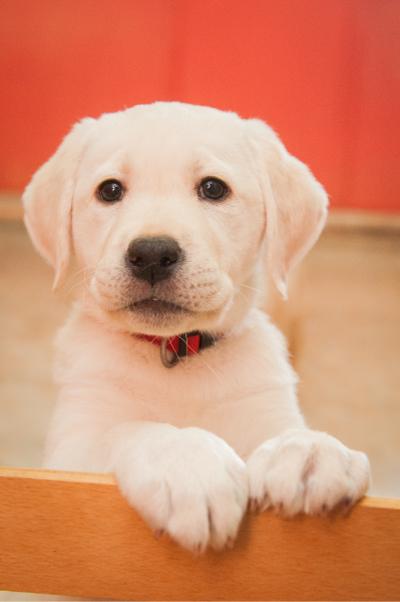 Стани КРЪСТНИК на бебе от програмата за обучение и социализация на млади кучета.