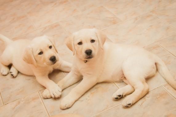Кампания стани Ангел Хранител на куче от програмата на Фондация Очи на четири лапи