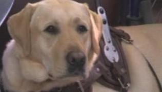 (Български) Нова ТВ – Куче с мисия: асистенти на четири лапи помагат на хора с увреждания 28.08.2017
