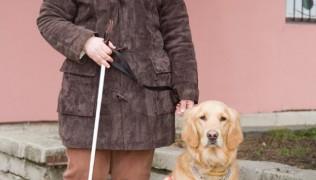 Марица БГ – Куче помага на дете с диабет 02.09.2017