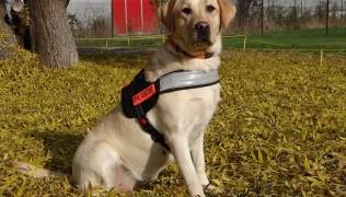 Мисия – куче асистент