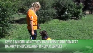 (Български) България 24 – КУЧЕ С МИСИЯ 17.07.19