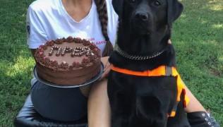 Честито на инструктор М.Маринова за дипломирането на лабрадорката Прея като куче асистент на дете с диабет!