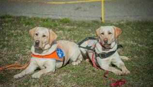 (Български) БНР Радио София-кучета асистенти, сигнализиращи диабетни кризи 10.10.19