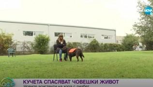 """Нова ТВ, предаването """"На кафе"""" – Как се обучава куче асистент 15.10.20"""